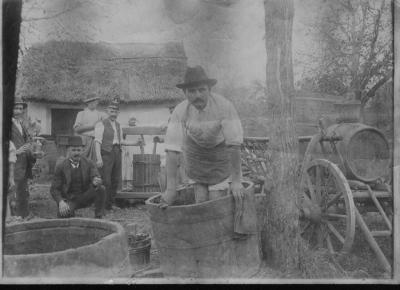 Szüretelők a Peckesen 1930 körül